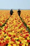 Ispettori del tulipano sul lavoro Immagini Stock Libere da Diritti