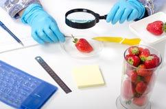 Ispezione delle fragole con una lente d'ingrandimento Fotografia Stock