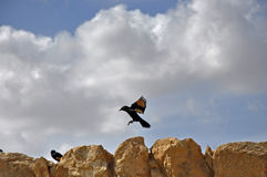 Israel, Birds on the rocks Stock Image