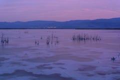 israel dött hav salt kristaller Arkivbilder