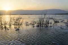 Israel. Dead sea. Dawn. Sunrise. Israel. Dead sea. Beach. Ein Bokek zone. Crystals of salt stock images