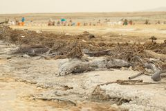 Israel, Dead Sea, June 2018: people rest in the water of the dea. D sea on the beach of Ein Gedi royalty free stock image
