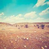 Israel Desert foto de archivo libre de regalías