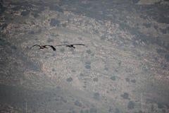 Israel Hula Valley Fotografía de archivo
