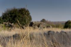 Israel landscape Stock Images