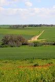 Israel-Landschaft Stockfoto