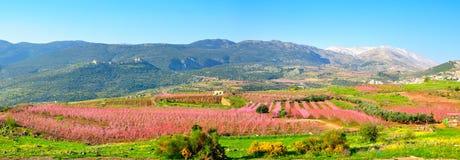 Israel-Landschaft Stockfotografie