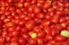 Israel market produce: fresh red tomatoes Stock Photos