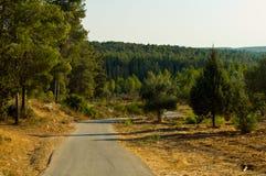 israel natur Arkivbilder