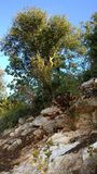 Israel Nature Images libres de droits