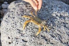 Israel. Netanya, crab, shore of the Mediterranean Sea Royalty Free Stock Photos