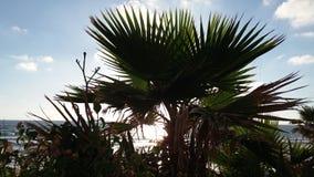 israel solnedgång Royaltyfria Bilder