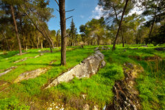 Israel in Spring Stock Images