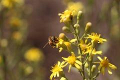 Israelen blommar på våren Fotografering för Bildbyråer