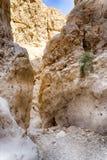 Israeli desert travel. Hiking in arava desert of Israel Stock Photos
