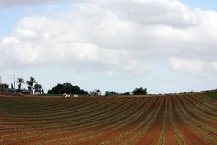 Israeli field. Typical agricultural landscape of the central Israel Stock Photography