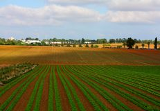 Israeli landscape with salad field. Typical agricultural landscape of the central Israe Royalty Free Stock Images