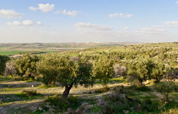 Israeli Spring landscape . Rural israel landscape at the spring day Royalty Free Stock Photo