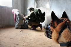 Israelsoldater som arresterar terroristen Arkivbilder