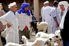 A sheep seller in the souk of the city of Rissani in Morocco royalty free stock photography