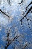 isstorm arkivbild