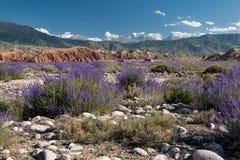 Issyk Kula jeziorni otoczenia w Kirgistan, Tian shanu góry Obrazy Royalty Free