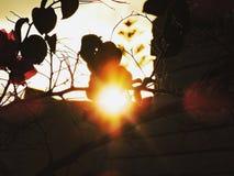 Ist die Sonne wie stark? Stockbilder