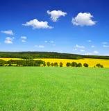 Ist ein grünes Feld voll der Weizenanlagen Stockfoto