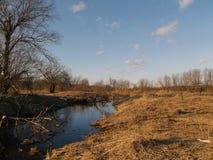 Ist ein grünes Feld voll der Weizenanlagen Lizenzfreie Stockfotos