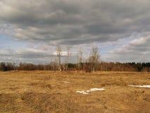 Ist ein grünes Feld voll der Weizenanlagen Lizenzfreies Stockbild
