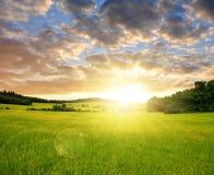 Ist ein grünes Feld voll der Weizenanlagen Stockbild