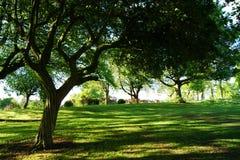 Ist ein grünes Feld voll der Weizenanlagen Stockbilder