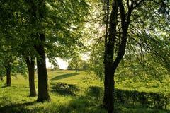 Ist ein grünes Feld voll der Weizenanlagen Stockfotos