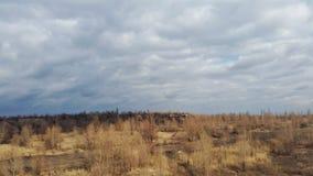 Ist ein grünes Feld voll der Weizenanlagen Bewölkter Himmel Stockbild