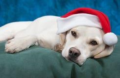 Ist es Weihnachten schon? Stockfotos