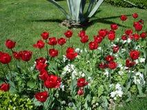 Istambul é igualmente um jardim bonito Imagens de Stock Royalty Free