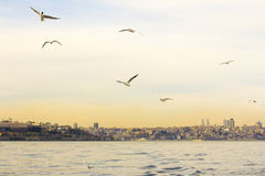 Istanbul the capital of Turkey, eastern tourist city. Stock Image