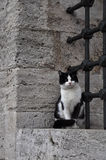 Istanbul cat is guarding the Suleymaniye Mosque. Cat is sitting on a stone wall Royalty Free Stock Photos