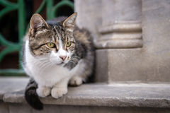 Istanbul cat Stock Images