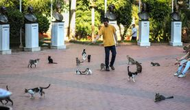 Istanbul cats park, people play with street cats, 2018 new photo. Istanbul cats park, people play with a lot of wild stray cats, 2018 new photo stock photo