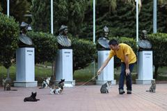 Istanbul cats park, people play with street cats, 2018 new photo. Istanbul cats park, people play with a lot of wild stray cats, 2018 new photo stock photography