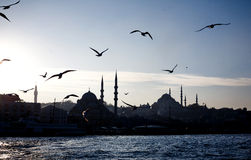 Istanbul city with flying seagulls Stock Photo
