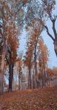 Photo autumn tree nature landscape. Autumn royalty free stock photo
