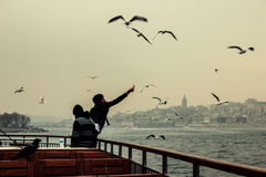 Istanbul corvus and seagull royalty free stock photos
