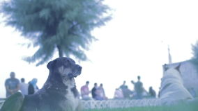 İstanbul Dogs 1 stock video footage