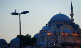 Istanbul at dusk, a seagull landed on streetlights Stock Photos
