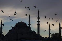 istanbul Fåglar ovanför den forntida moskén royaltyfria foton