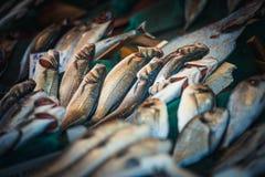 Istanbul fish market Royalty Free Stock Photos