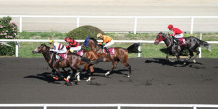 Istanbul Horse Race Stock Photography