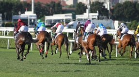 Istanbul Horse Race Royalty Free Stock Image